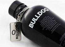 Bulldog Gin mit Halsband